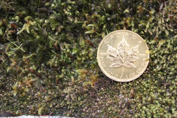 gold coin in moss