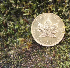 gold-coin-in-moss.jpg