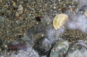 Gold coin in the river