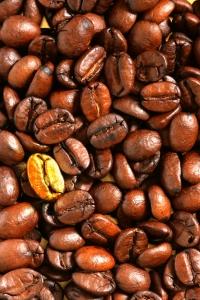 golden coffee bean
