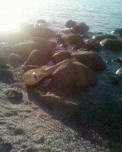 guitar-beach