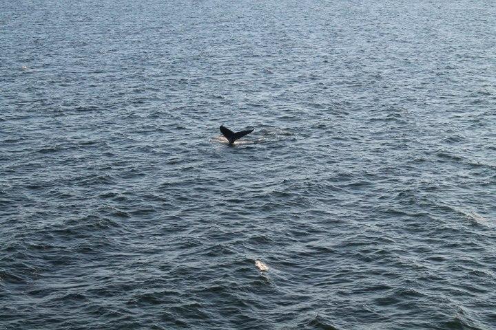 Orca_Nanaimo